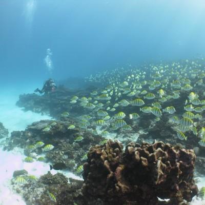 Reef Report 2014