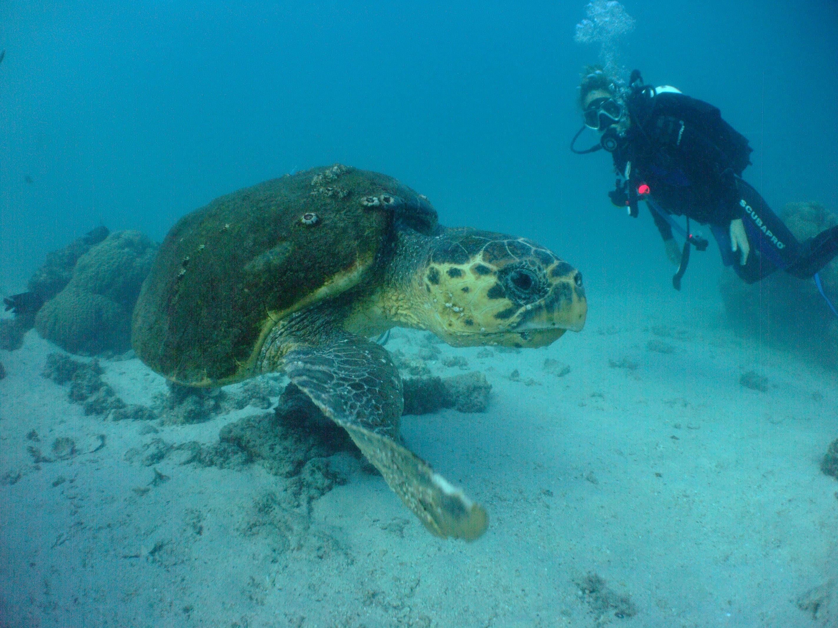 Sail ningaloo ningaloo dive courses padi open water - Ningaloo reef dive ...