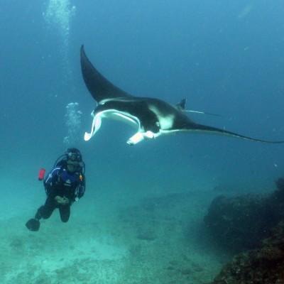 Diver and Manta ray at the Elbow aboard Sail Ningaloo.