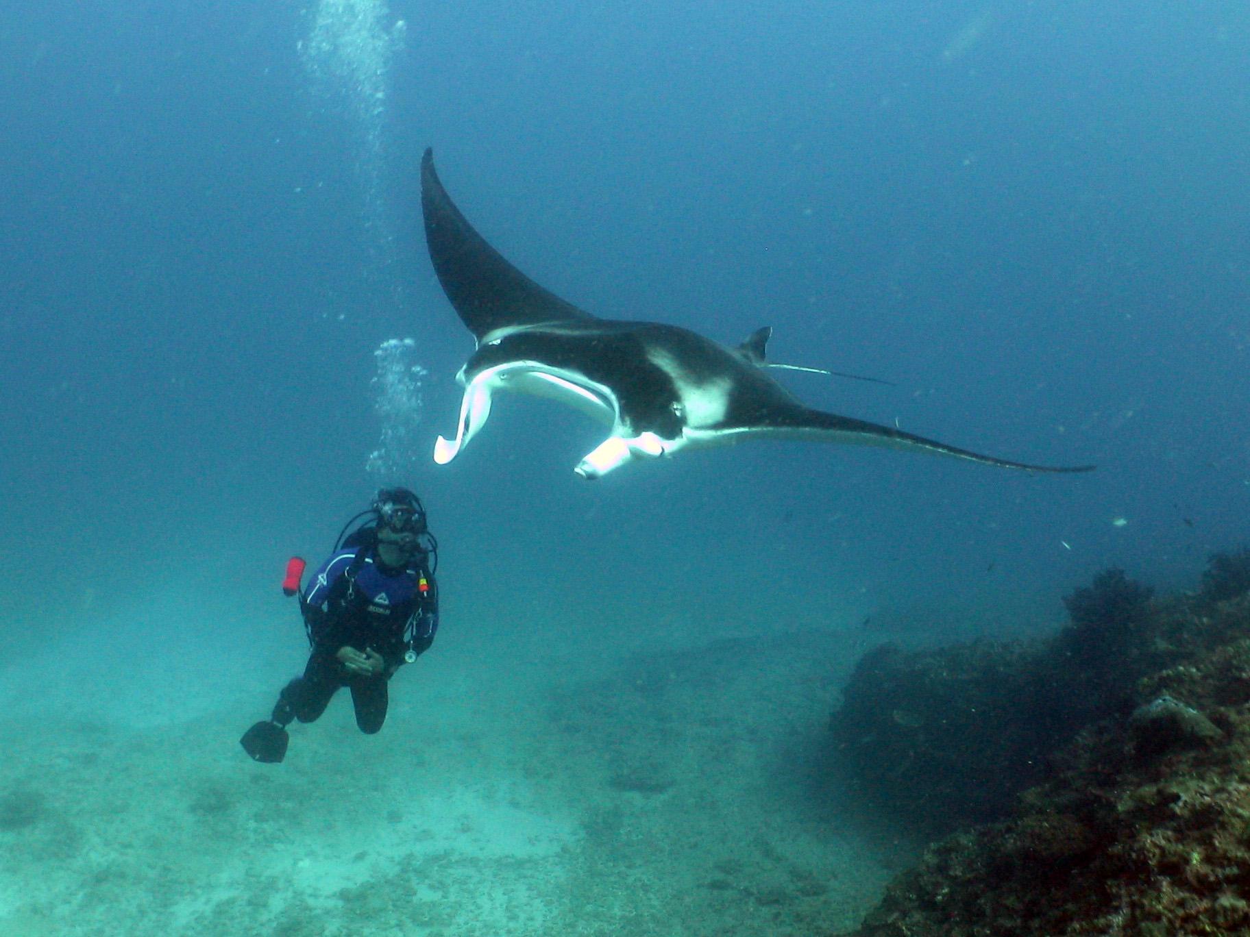 Sail Ningaloo Sail Ningaloo Scuba Diving - Liveaboard Dive Trip