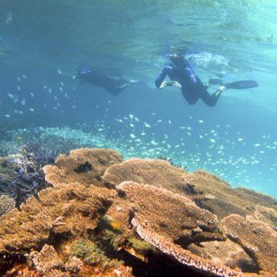 Sail Ningaloo Coral Gardens