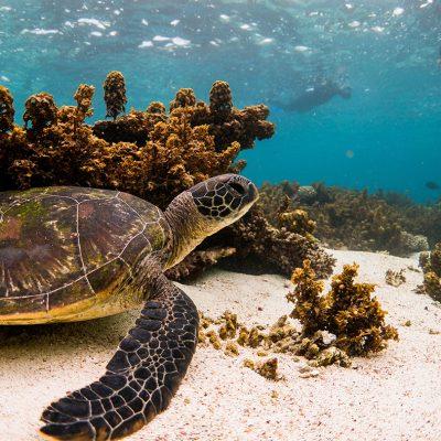 Turtle-Snorkel-Cameron-Barto