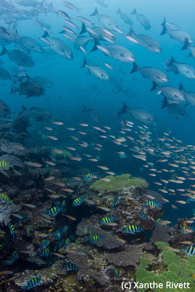 Ningaloo_Reef_Western_Australia-8863